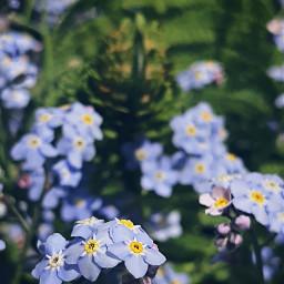freetoedit nature flowers greenday