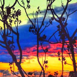 sunsetsky forrestnature colors