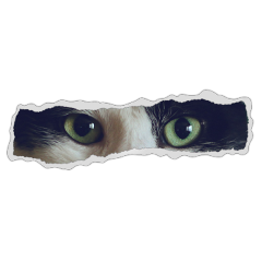 aesthetic paper cat createfromhome freetoedit ftestickers