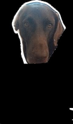 doghead freetoedit