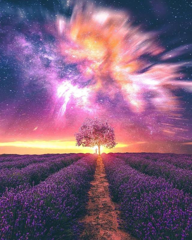 #picsart #remixit #freetedit #sunset #sunrise #sky #clouds #night #day #milkyway #stars #galaxy #planet #field #tree #sun #light #glow #color #flowers