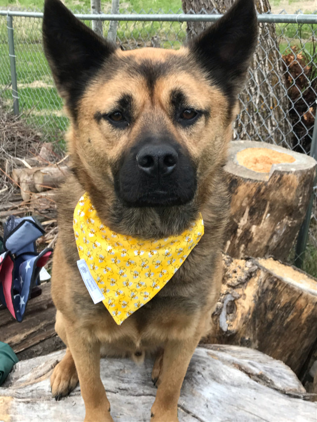 If you are looking for something cute and fun for you dog or cat, check out my buisiness @charlies.bandanas on instagram or CharliesBandanasShop on Etsy! #etsyshopowner #etsy #smallbusiness
