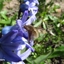 freetoedit followme bees insect insect_perfection