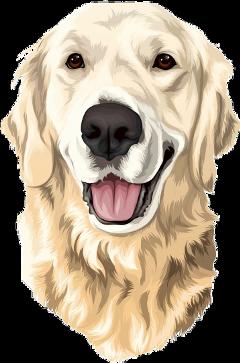 freetoedit dog lab retriever yellow