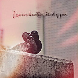 love pigeons kiss peaceful freetoedit