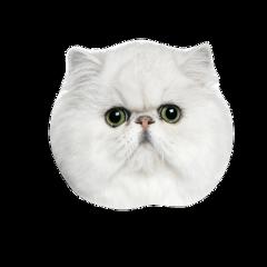 freetoedit кот пушистыйкот голова