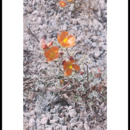 vin2fltr photography beautyinnature naturelover wildflowers