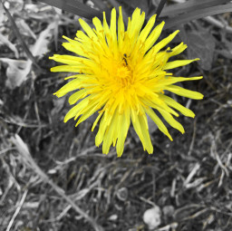 freetoedit flower yellow photography nature