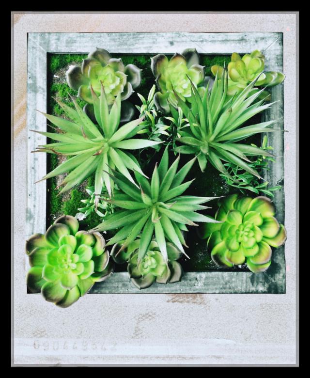 #UseOnlyMe #sticker #thanks #tomoko22 #effect #lighting #camera #vintage #English #Letter #Design #frame #polaroid #camera #garden #thanks #flower #Shadow #Design #Creative #gold #heart #jewel #green