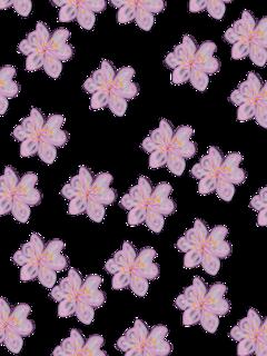 freetoedit flowers summer pink purple