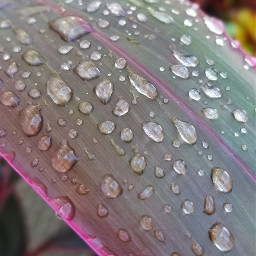 rainyday myphotography nature leaves waterdrop freetoedit