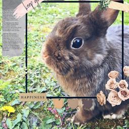 freetoedit cutie rabbit animal sweetheart srcflowerframe flowerframe