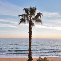 beachmood sunrise atthebeach nature palmtree freetoedit