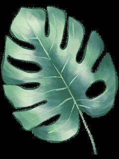 palmleaves palmleaf leaf leaves nature freetoedit