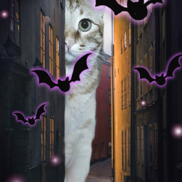 freetoedit myedit cat bats lights