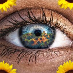 freetoedit eye flowereyes flowers sunflowers ecflowereyes