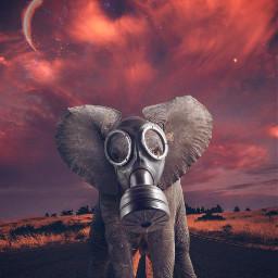 freetoedit nature gasmask elephant myedit