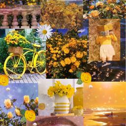 wallpaper yellow flower yellow_flower freetoedit