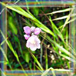 freetoedit flowerfriday rainbowbrush rainbowbrusheffect california