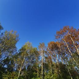 trees sky bluesky beautifulday spring freetoedit
