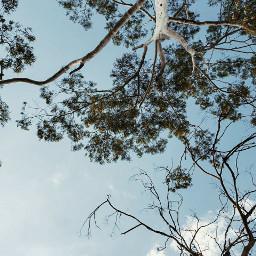 freetoedit sky blue tree cloud pctheskyabove theskyabove