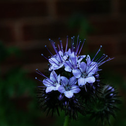 nature flower closeup adjusttool dailywalk freetoedit