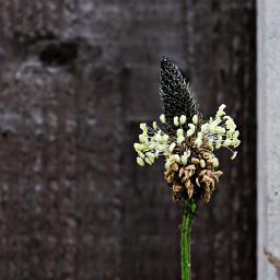 nature closeup wildflowers freetoedit
