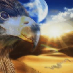 freetoedit desertlife desert bird eagle