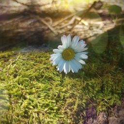 freetoedit blume flower wald fotography