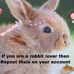 freetoedit repost bunny rabbit
