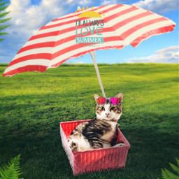 freetoedit cat umbrella grass stickers