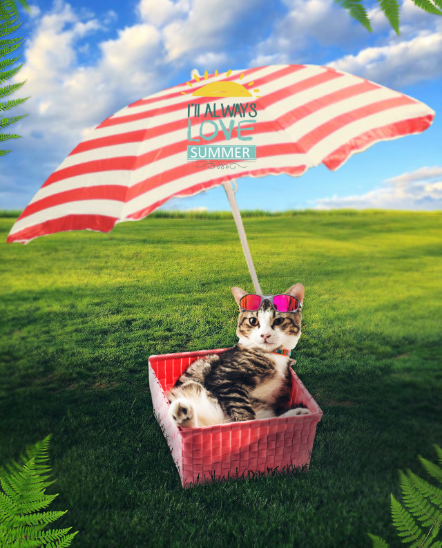 #freetoedit #cat #umbrella #grass #stickers #summer #magicbrush #madewithpicsart #picsarteffects