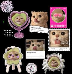 kittycado kittycadopremade premade premades cat freetoedit
