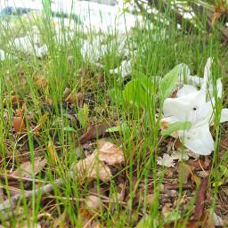 freetoedit nature green grass ground