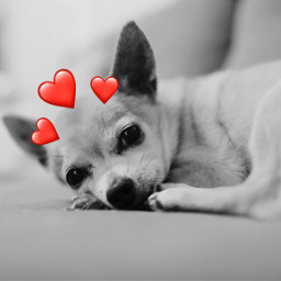 freetoedit heart heartcrown red redheart