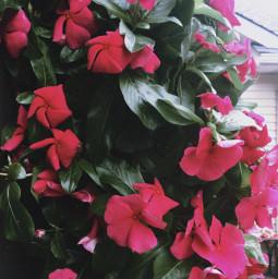 flowers garden spring freetoedit