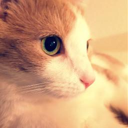 cat catlover jerry oneyearold photobyme