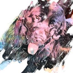 freetoedit newfoundland puppy dog ireland