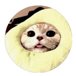 kittycado 𝐊𝐈𝐓𝐓𝐘𝐂𝐀𝐃𝐎 kittycadopfp kittycadoprofilepicture pfp freetoedit
