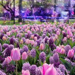 photographyart flowers freetoedit