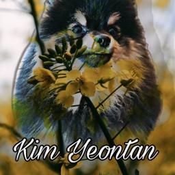 freetoedit bts btsarmy yeontanbts kimyeontan