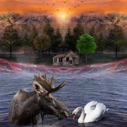 freetoedit nature deer swan animals