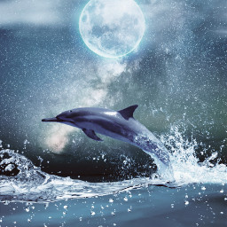 freetoedit dolphin sky universe