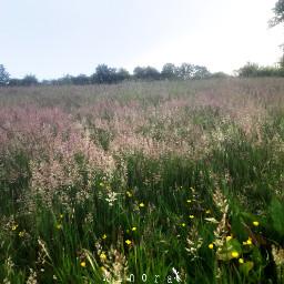 morningwalk kinora grassland grass grassfield freetoedit