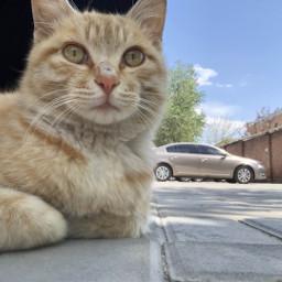 freetoedit cat cute car
