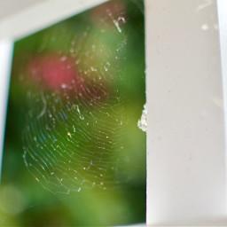 spider sipiderweb web nature garden freetoedit