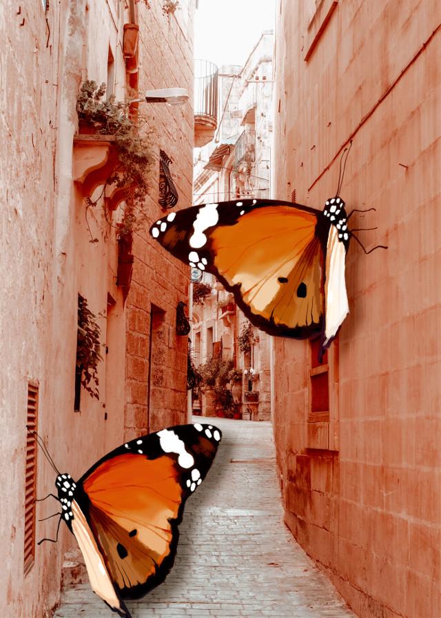 #freetoedit #street #butterfly #amazing