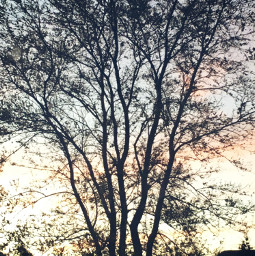 tree sunset minnesota night myphotography freetoedit