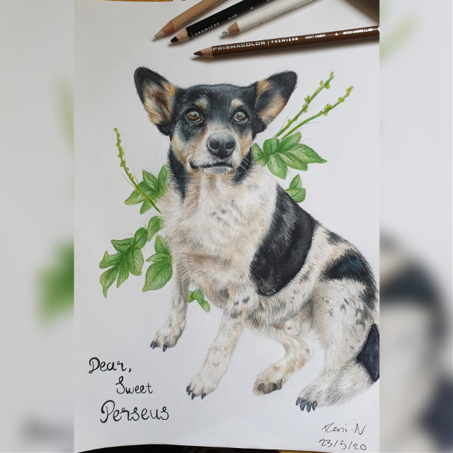 Was an absolute pleasure to draw this for a close friend who recently lost this chonk not long ago❤❤🐶🐕 #dog #animal #traditonalart #drawing #art #prismacolorpencils #prismacolor #copics #copicmarkerau #copicmarkers #traditonalartist #illustration #wip #progress #pet #petportrait   #freetoedit