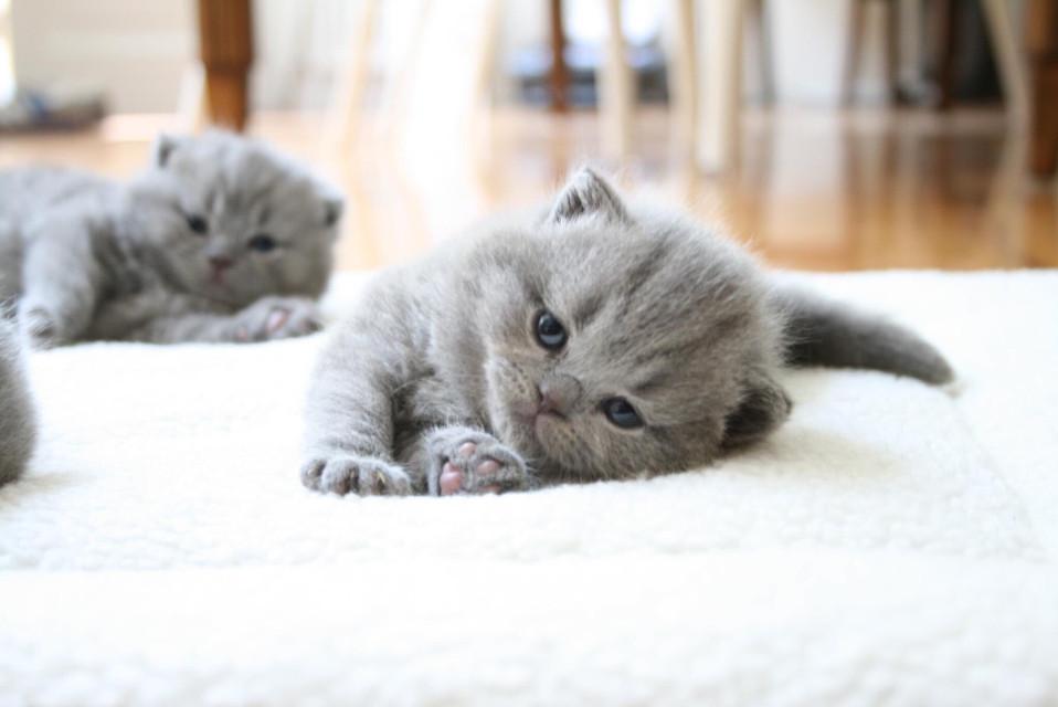 #cat #cats #pet #pets #animal #animals #funny #cute #love #art #follow #follow4follow #followme #like #likeme #likeit #likeaboss #like4follow #likes